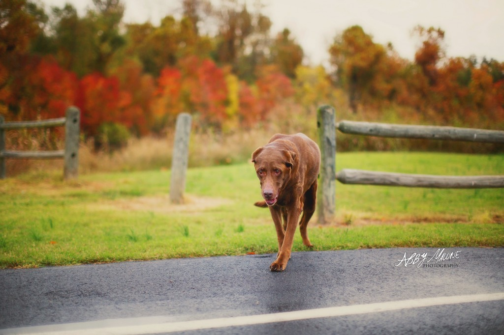 Pet Photography in Bryant, AR