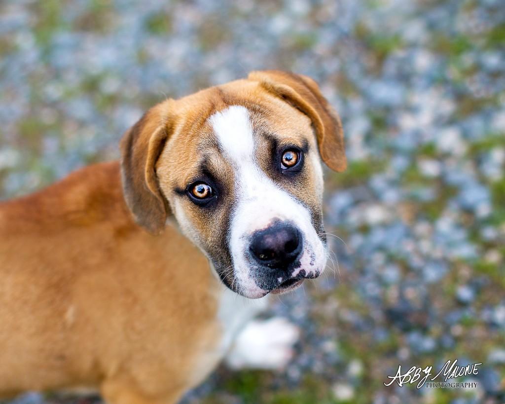 Benton Pet Photographer