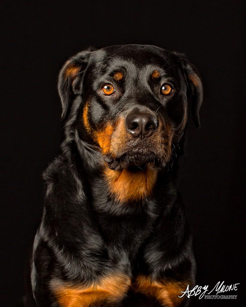 Dog Photographers Maumelle, AR