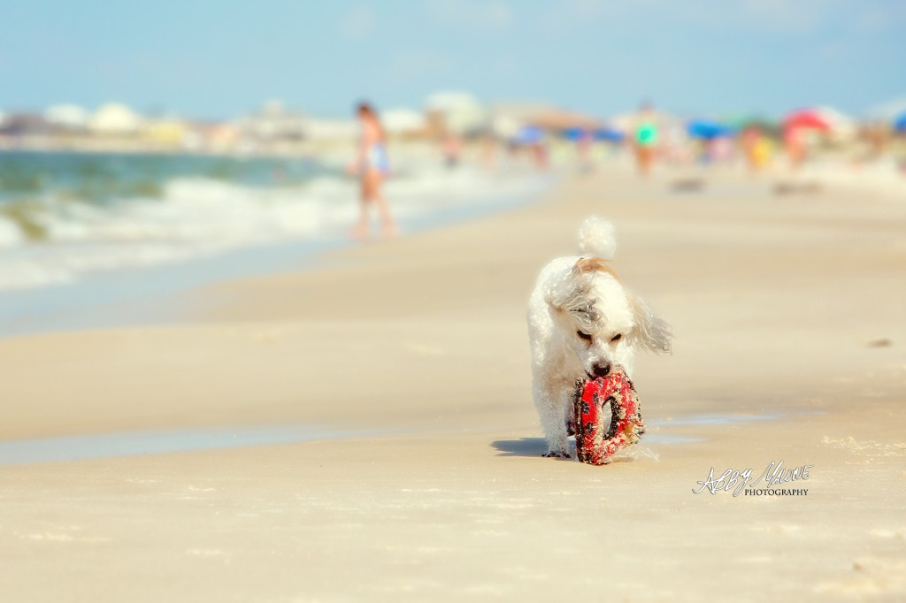 Pet Photography on the Beach
