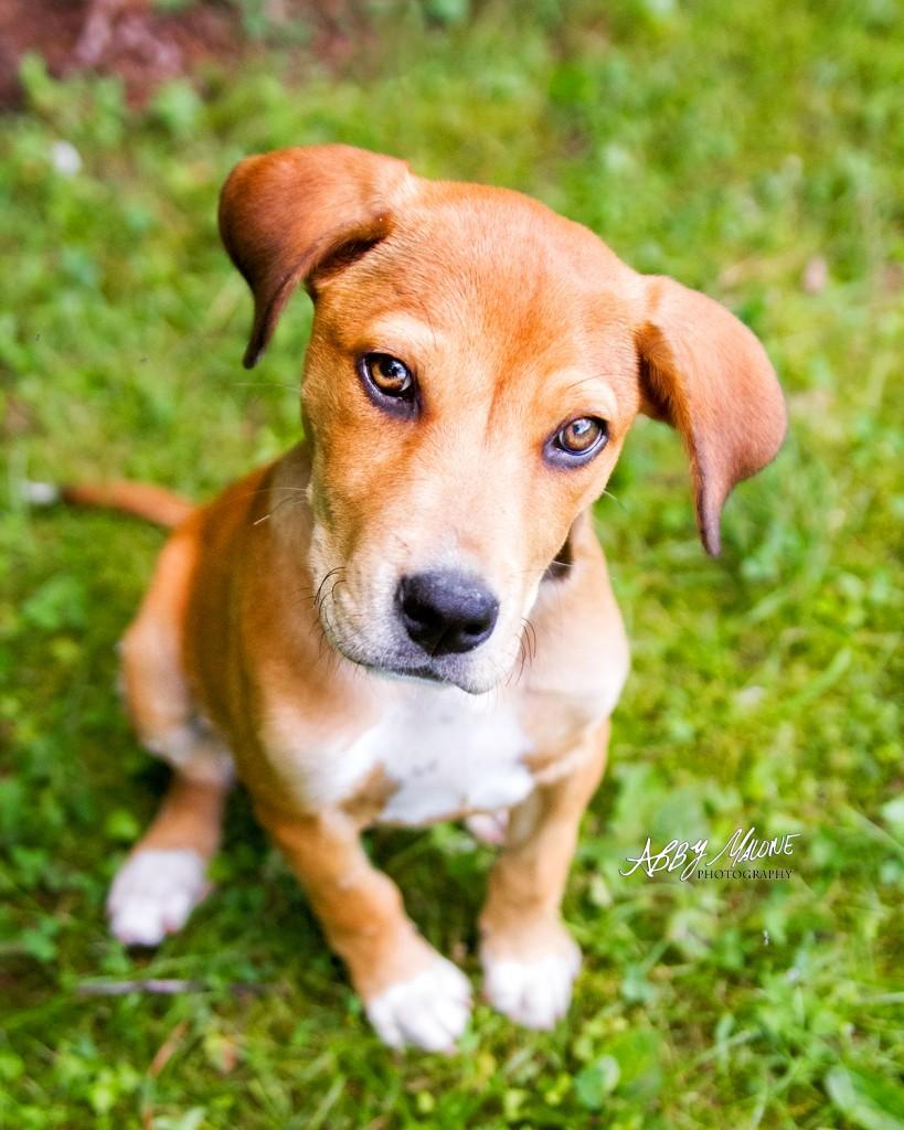 Pawsonality Pet Photography