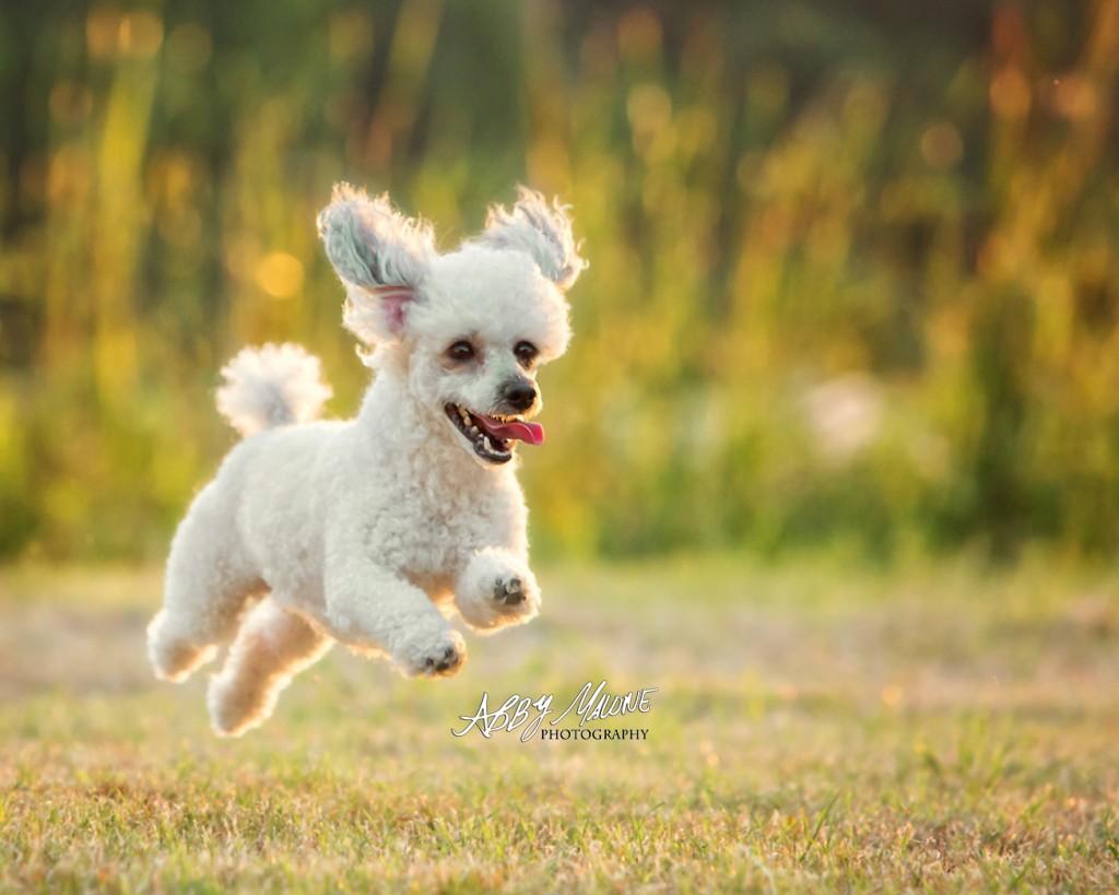 Dog Photography Little Rock, AR