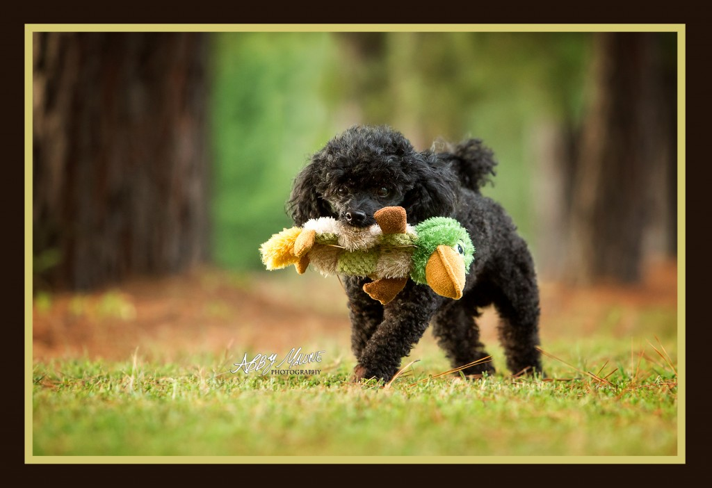 Central Arkansas Pet Photographers