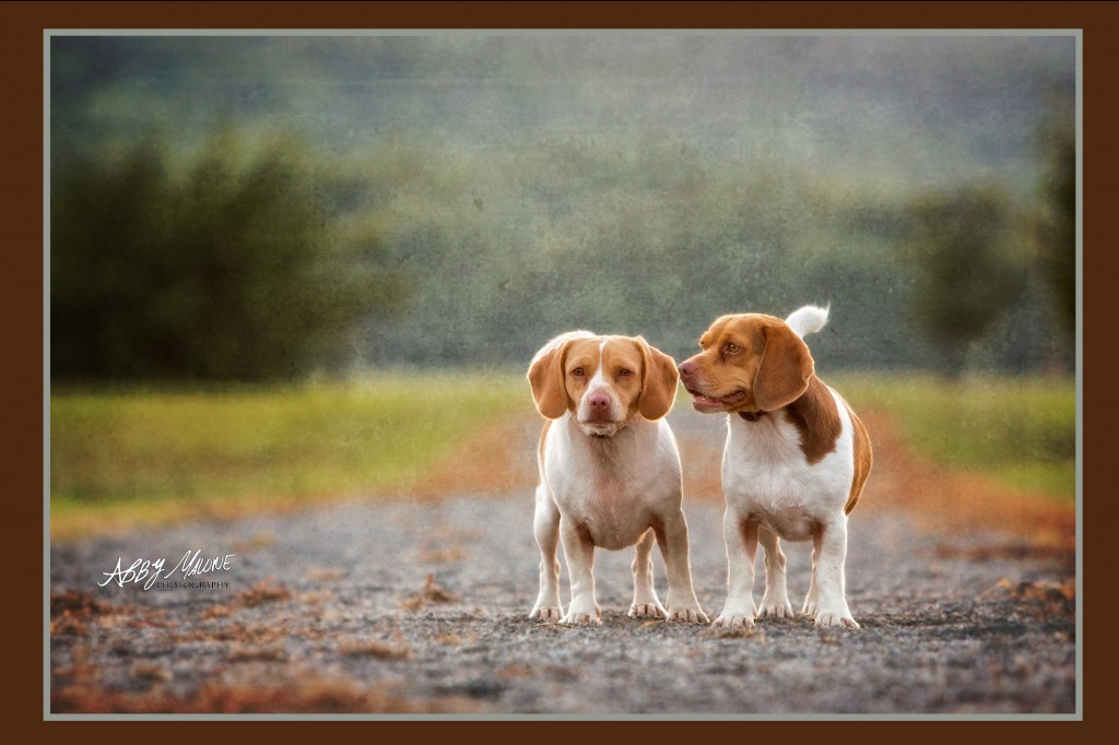 Central Arkansas Dog Photography
