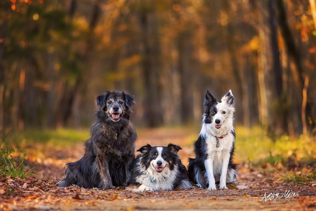 Central Arkansas Dog Photographers