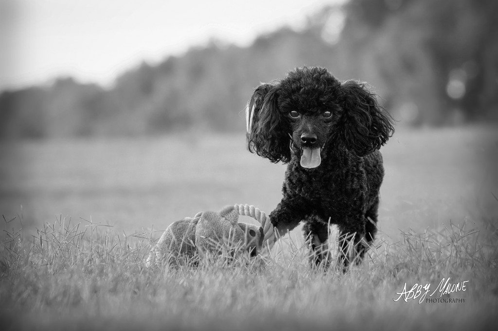 North Little Rock, AR Pet Photographers