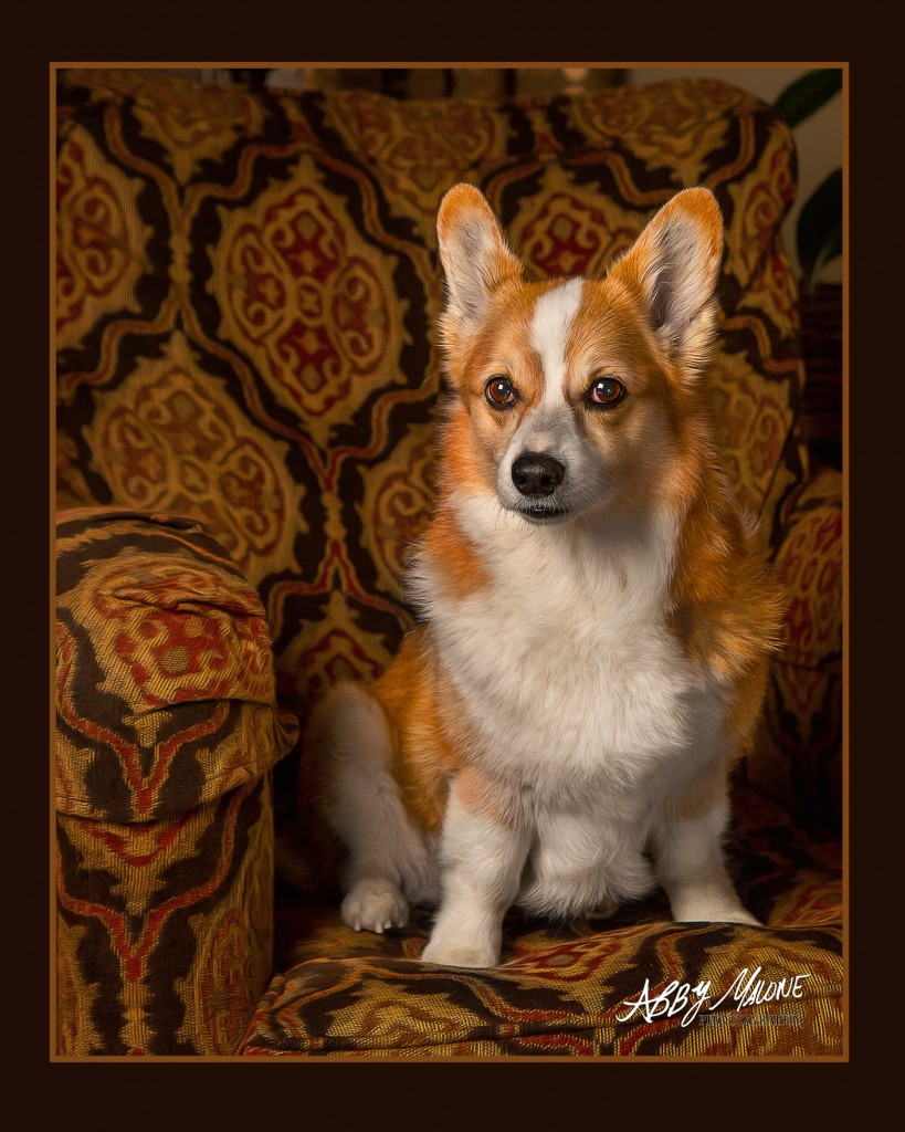 Dog Photography Maumelle AR