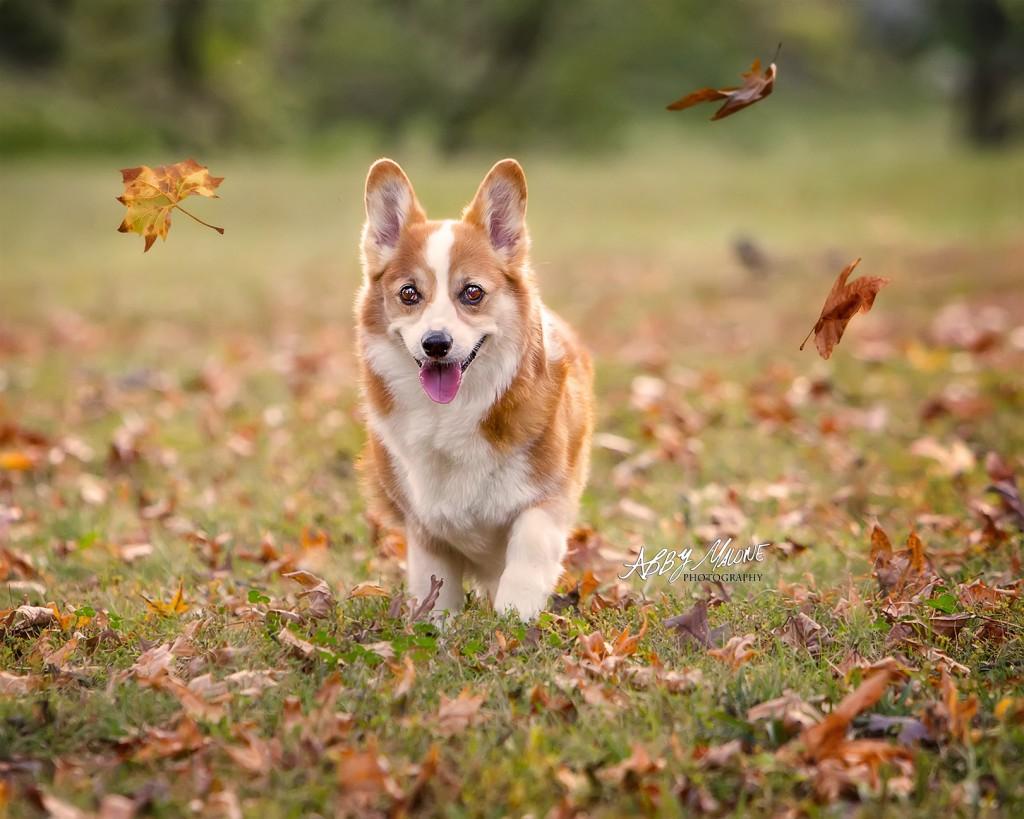 Pet Photography Maumelle AR