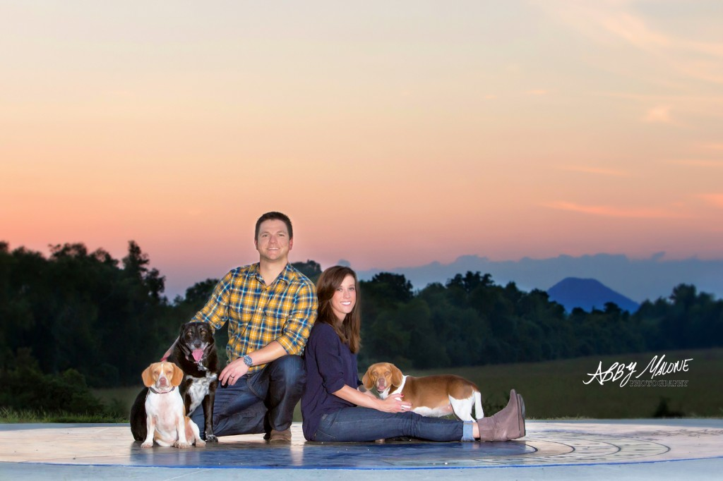 Best Dog Photographers in Little Rock AR