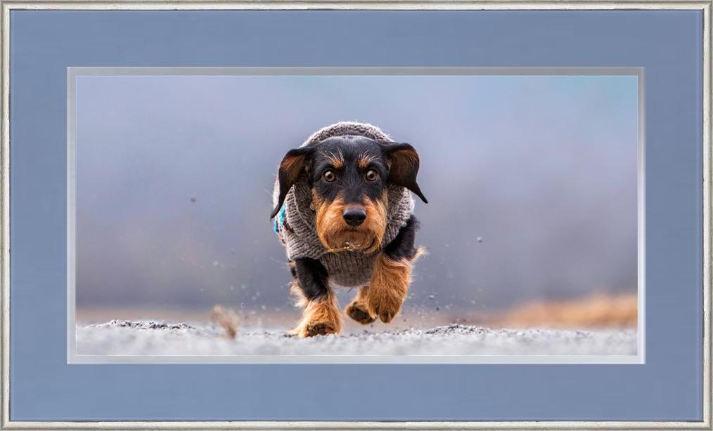 Best pet photographers