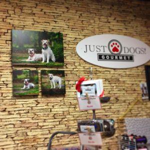 Commercial Pet PHotographers