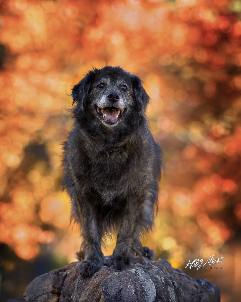 Dog Photographer Burns Park Arkansas