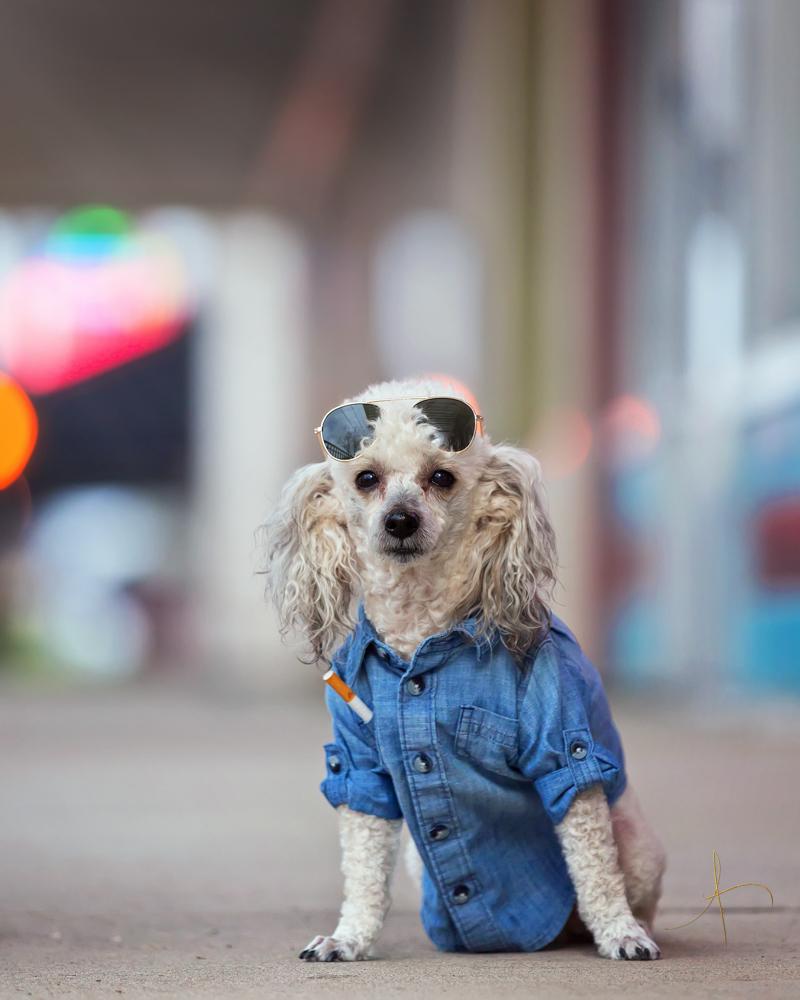 Best Pet photographer