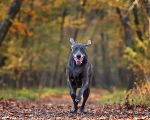 Flying Dog Photography