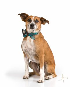 Commercial dog photographers