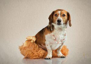 Beagle in Tutu