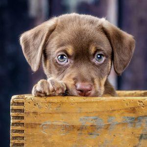 Bashful Puppy