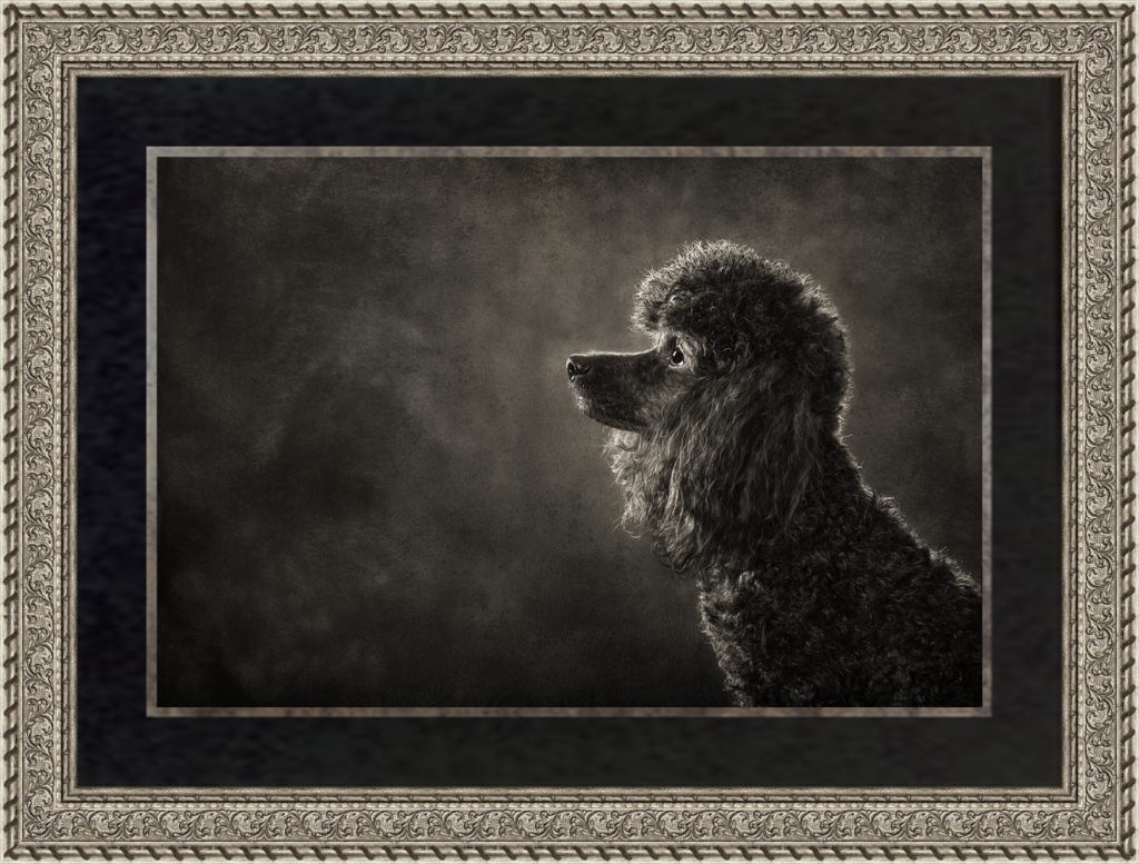 Classic Dog Portrait Photography