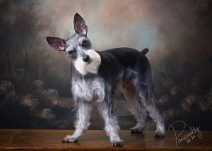 Classic Pet Portraits Arkansas