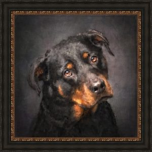 Rottweiler Mixed Media Portrait